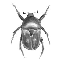 icon-scarab2